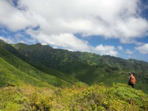 Kulepeamoa ridge in East Oahu