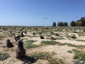 Hatchlings on a beach