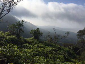 Hawaiian Island ridge lines and foliage