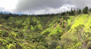 Ridgeline and Cook Pines